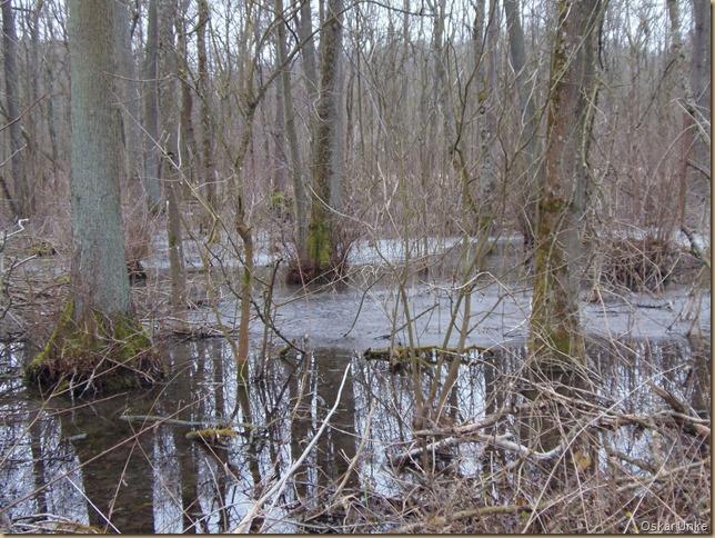 Verlandungsflächen im Weingartener Moor