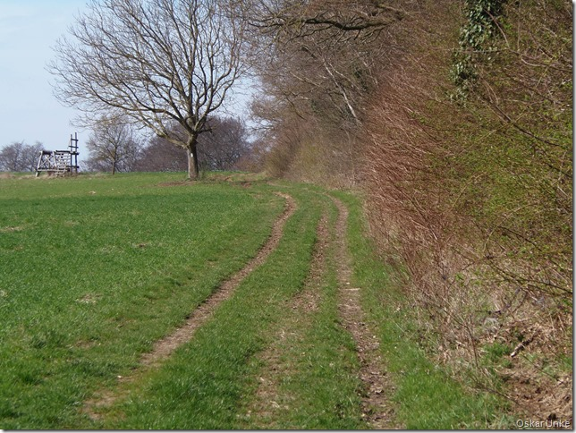 Waldrandweg