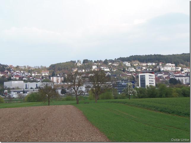 Blick von Obrigheimer Neckarwiesen