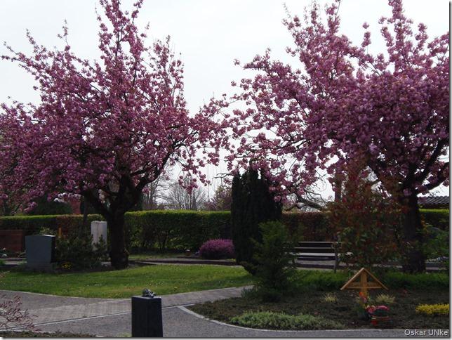 Weingartener Frühling