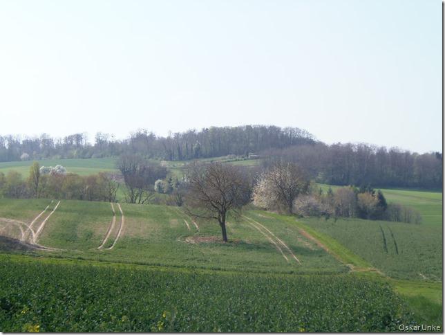 Weingartener Feldlandschaft