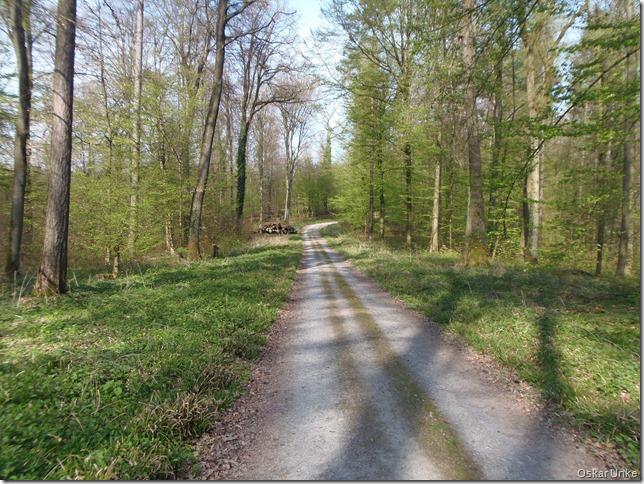 Waldweg nach Grötzingen