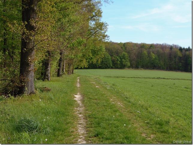 Waldrandweg bei Dürrenbüchig