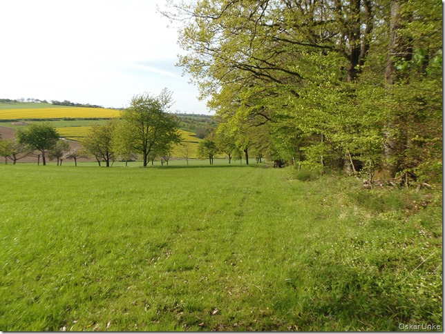 Waldwiesen + Obstbaumwiesen