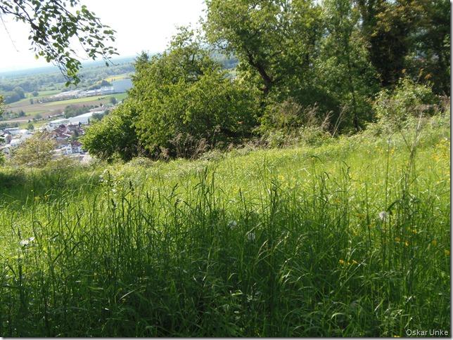 Wiesenlandschaft auf dem Kirchberg