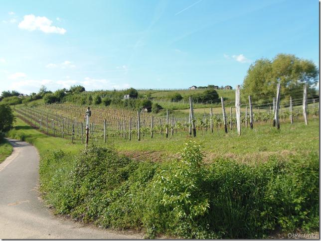 Weinberge am südlichen Kirchberg