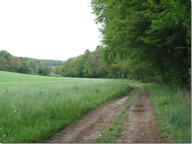 Dann am Wald entlang