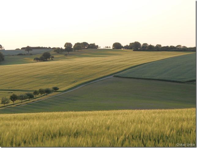 Nochmals Getreide, Getreide