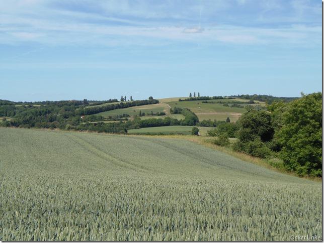 Weingartener Feldflur
