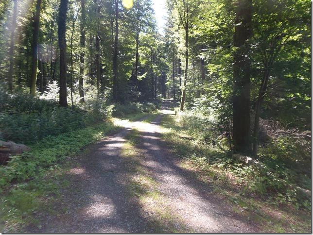 anschließend in den Kühlen Wald