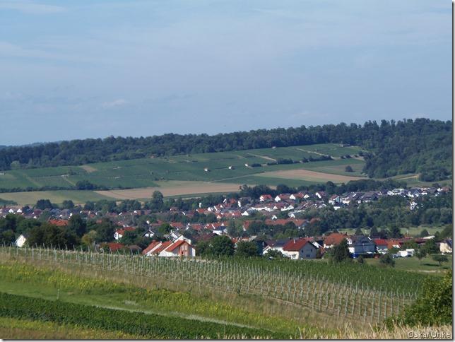 Weinberglandschaft