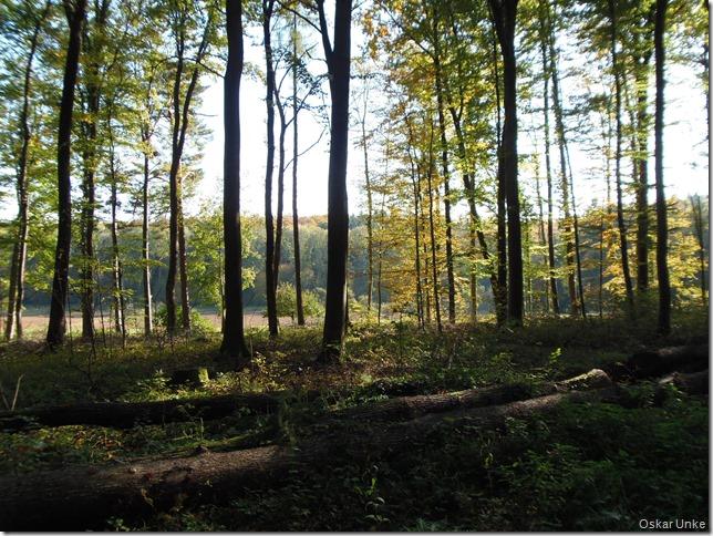 Wunderbarer Herbstwald