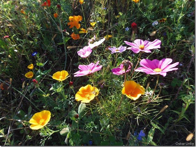 bunte Blumenvielfalt