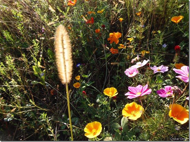 herrliche Sommerblumen
