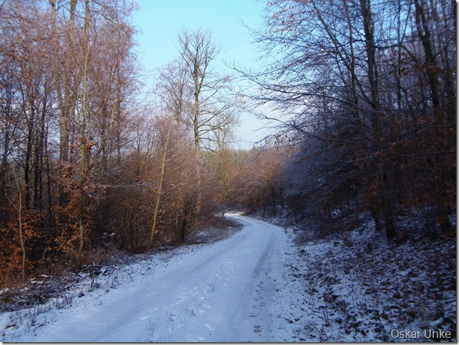 Im Wössinger Wald