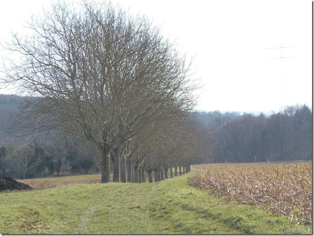 Nußbaumallee