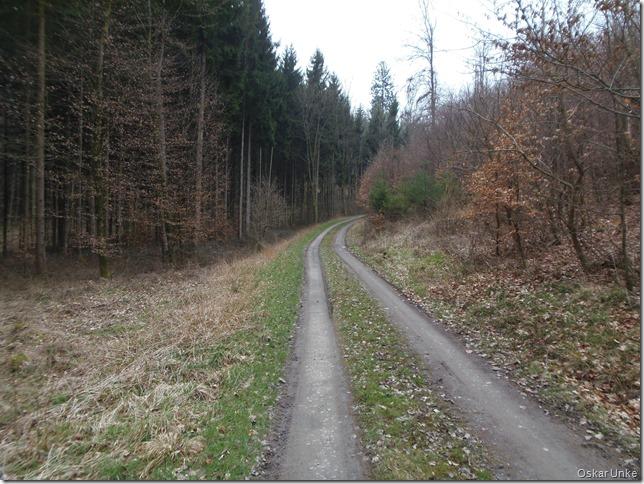 Verschwiegene Waldwege