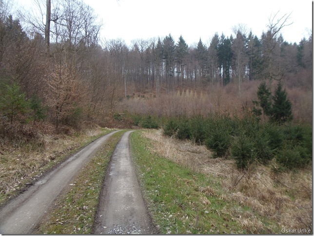 Waldwegidylle