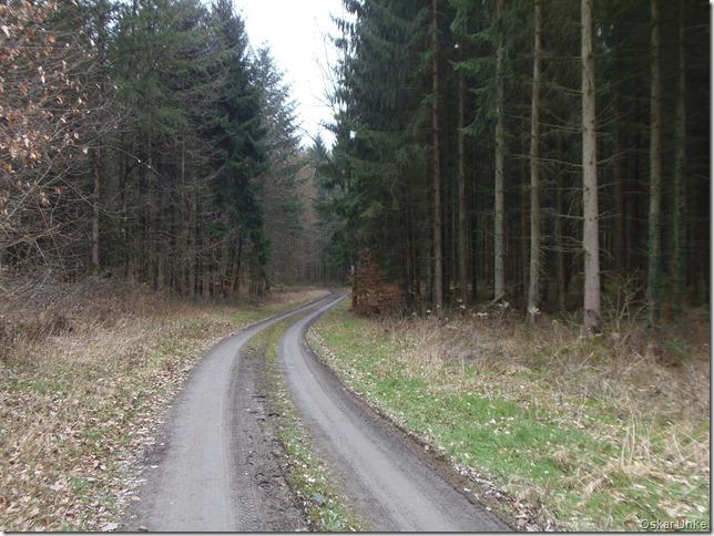 Idyllischer Waldweg