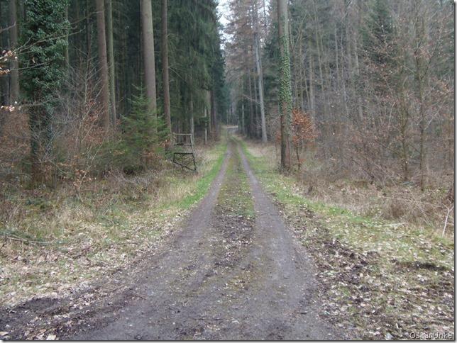 Geheimnissvolle Waldwege