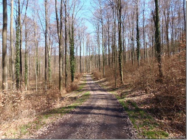Der Wald noch lichter