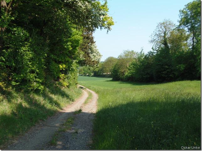 Waldrandwege