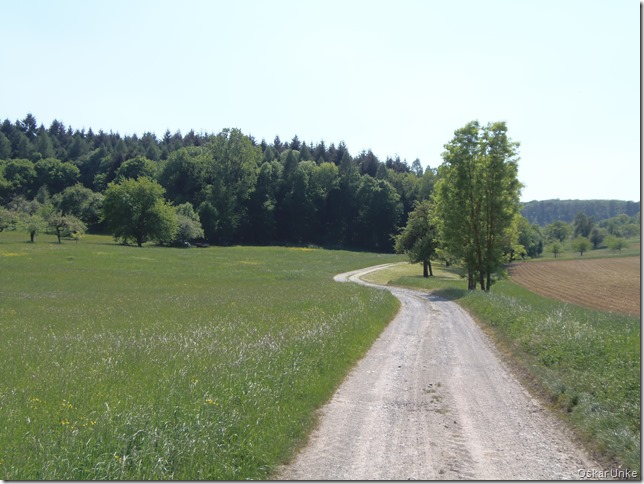 Gänsäckerweg in den Wald