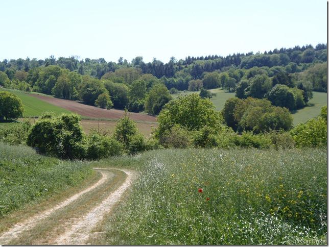 idyllische Feldwege
