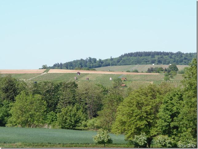 Blick auf Weingartener Weinberge