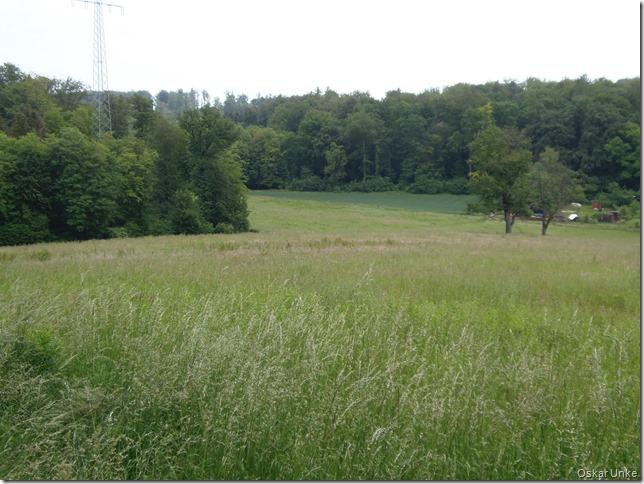 nochmals Wöschbacher Tal
