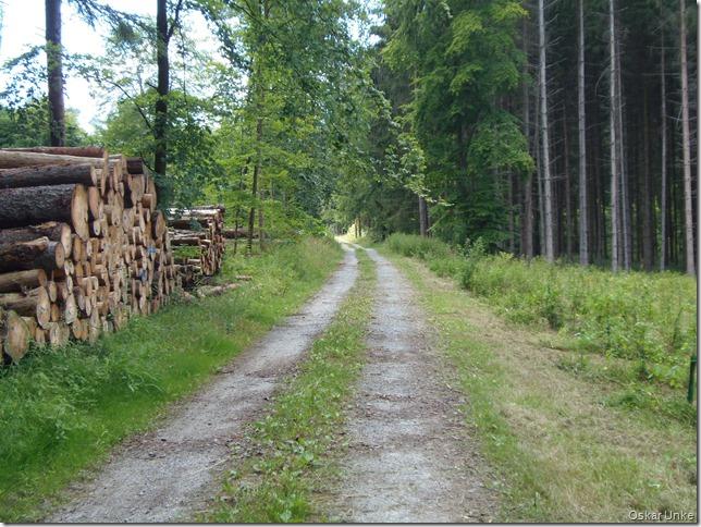 lauschige Waldwege