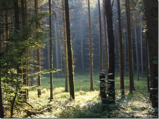 Im tiefen Tannenwald