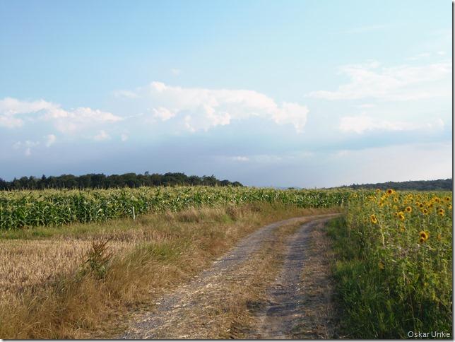 Über dem Schwarzwald Gewitterwolken