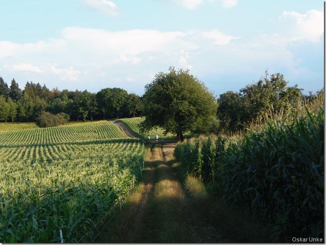 Sommerfeldlandschaft