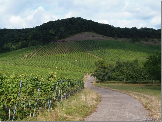 Weinberge in Diefenbach