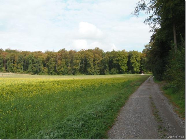 Binsheimer Waldweg