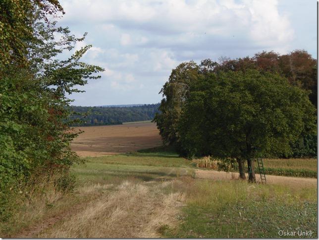 Wald und Wiesenwege