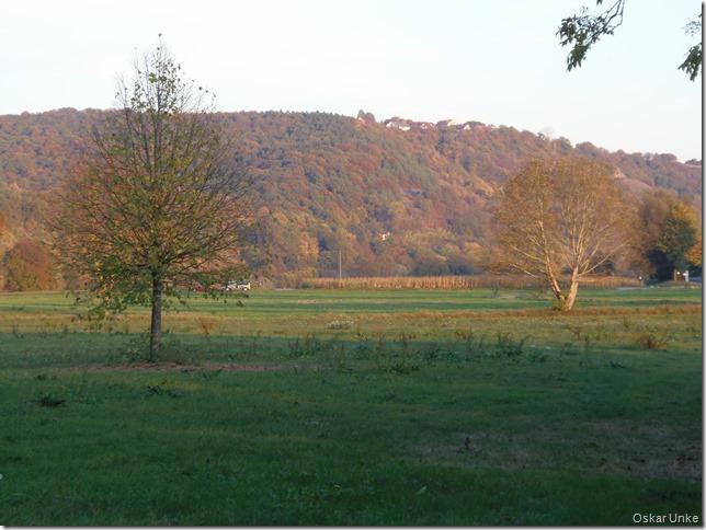 Neckarwiesen